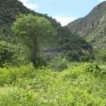Los cañones que predominan en esta cordillera, dan paso a una beleza inmensa tapizada por una vegetación que completa el paisaje
